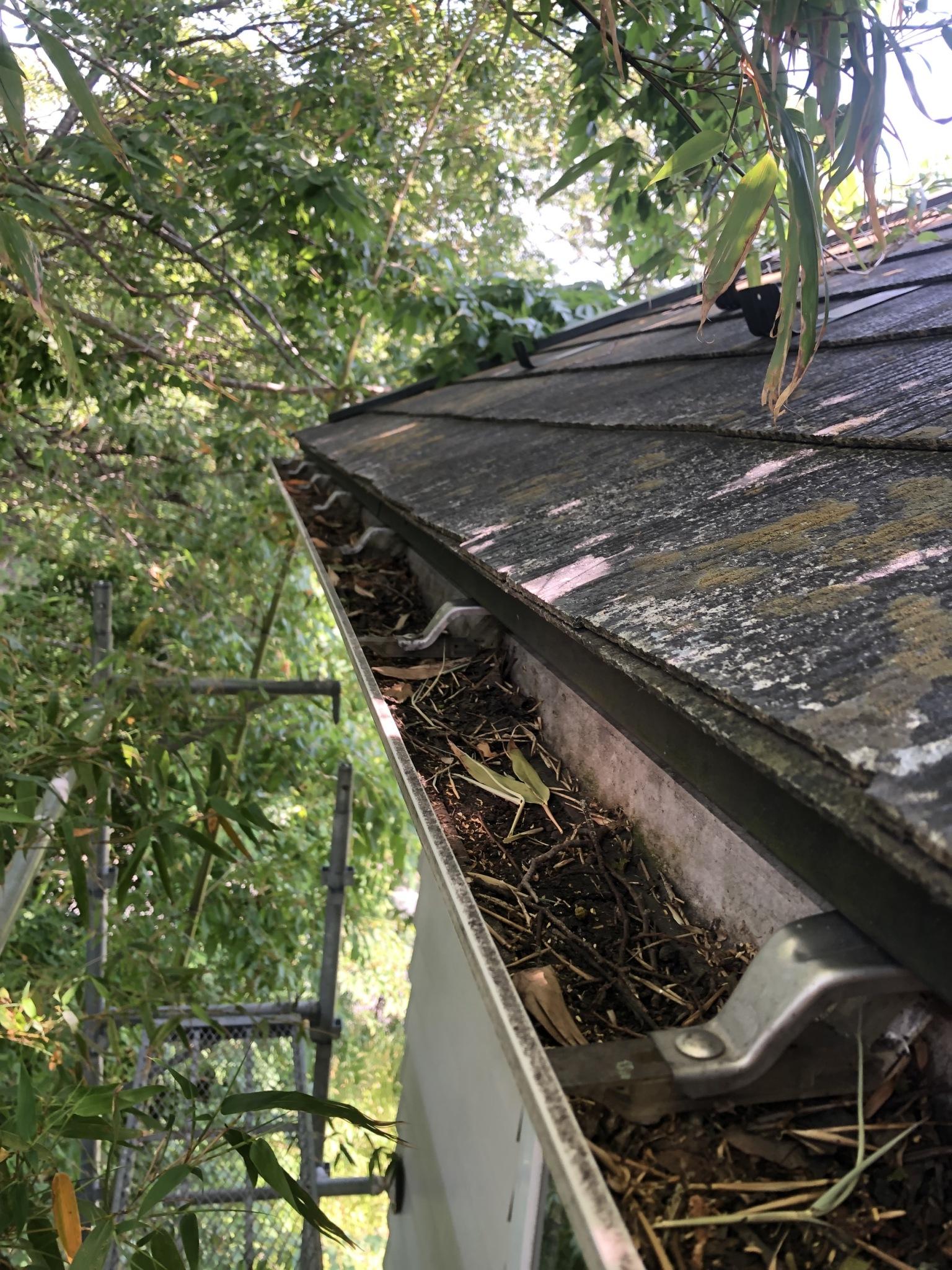 名取市で雨樋のメンテナンス。詰まりの原因は大量の落ち葉