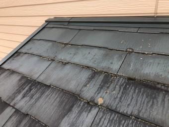 苔の生えた屋根の写真