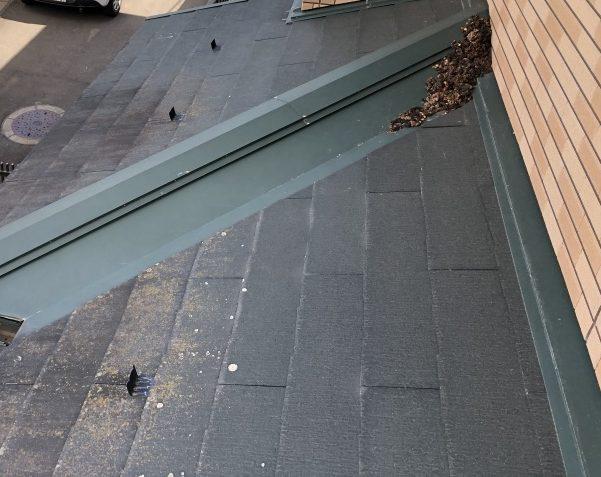 屋根の上に糞